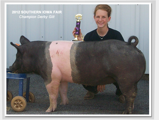 2012 - Champ Derby Gilt